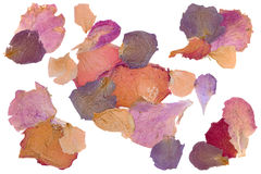 Free Dried Flower Rose Petals Royalty Free Stock Photography - 51935667