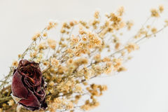 Dried flower rose vintage style Royalty Free Stock Photo