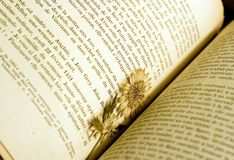 Dried flower used as a bookmark. In old French book Stock Photography