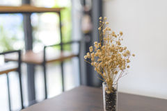 Dried flower in vase on table Stock Images