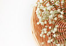 Dried flower Stock Images