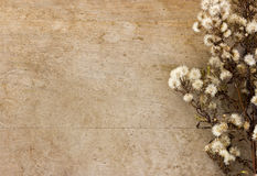 Dried flower Royalty Free Stock Image