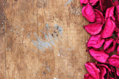 Dried flower Stock Image