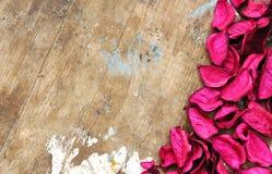 Dried flower Stock Photos