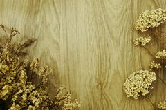 Dried flower on wooden background Stock Images