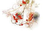 Dried flowers Royalty Free Stock Image