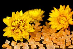 Dried flowers. Royalty Free Stock Image