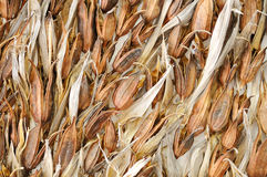 Dried flowers. Image of dried flowers and leaves Royalty Free Stock Photos