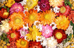 Dried flowers Stock Images