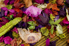Dried flowers royalty free stock photography