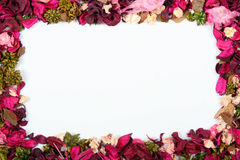 Dried flowers. Frame Stock Photography