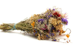 Dried flowers. Isolated on white Stock Photo