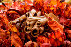Dried flowers and aromatic orange bark Stock Image