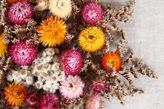 Dried flowers background Stock Images