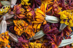 Dried flowers. Background dried flowers. Herbarium for decoration royalty free stock photos
