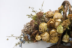 Dried a flowers, beautifully crafted, white backgrounds Stock Photography
