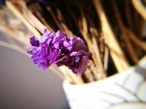 Dried flowers being arranged as ikebana Royalty Free Stock Images