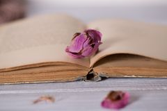 Dried flowers and book on wooden background.  stock photography