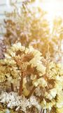 Dried flowers bouquet on white bricks background. Sweet, yellow, blossom, morrning, fresh stock photo