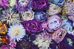 Dried flowers. Colourful dried flowers stock photos