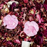 Dried flowers composition Royalty Free Stock Image