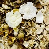 Dried flowers composition Stock Images