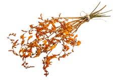Dried flowers Crocosmia Stock Photo