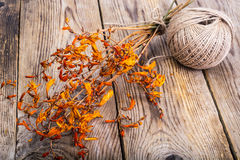 Dried flowers Crocosmia Stock Images