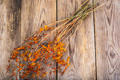 Dried flowers Crocosmia Royalty Free Stock Photos