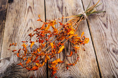 Dried flowers Crocosmia Stock Image