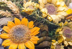 Dried flowers in the foreground, bouquets of dried flowers, flower arrangement Stock Image