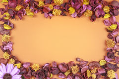 Dried flowers frame composition on colorful background. Top view, flat lay. Stock Image