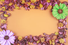 Dried flowers frame composition on colorful background. Top view, flat lay. Royalty Free Stock Photos