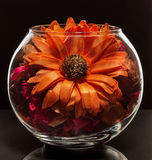 Dried flowers in a glass vase. Large pressed flower in a glass vase surrounded by small dry flowers Royalty Free Stock Image