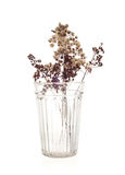 Dried flowers in glass Stock Photos