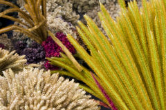 Dried Flowers and Grass of Mount Merapi, Indonesia Stock Photo