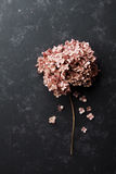Dried flowers hydrangea on black vintage table top view. Flat lay styling. Stock Photos