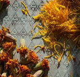 Dried flowers Royalty Free Stock Photos