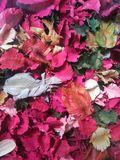 Dried flowers and leafs. Flowers and leafs dyed in natural color Stock Photography