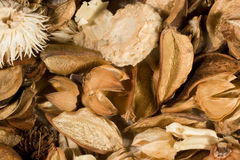 Dried flowers and leaves Stock Photography
