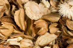Dried flowers and leaves. (as an autumn background Royalty Free Stock Photos