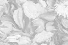 Dried flowers and leaves. (as a transparent black-and-white autumn background Stock Image