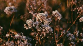 Dried flowers on meadow
