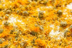 Dried flowers of medicinal calendula, homeopathy and aromatherapy stock image