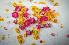 Dried flowers and petals of roses Royalty Free Stock Photography