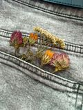 Dried Flowers. The picture of dried flowers in denim pocket Royalty Free Stock Photos