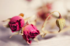Dried flowers red rose Royalty Free Stock Photo