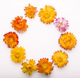 Dried Flowers ring stock photography