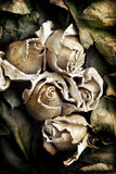 Dried flowers of roses Royalty Free Stock Photos