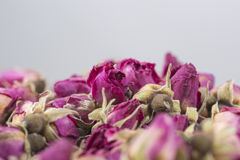 Dried flowers roses Stock Images
